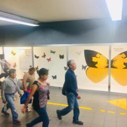 Expo Mariposas